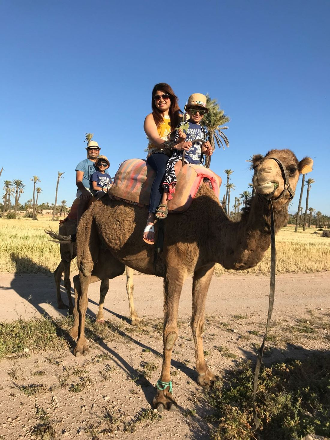 Camel ride, marrakesh, palmeira